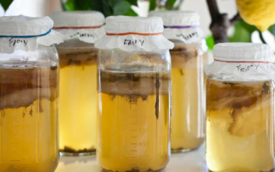 Kombucha: Health Cure or Food Fad?