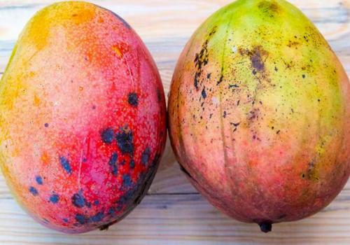 Fruit Hacks